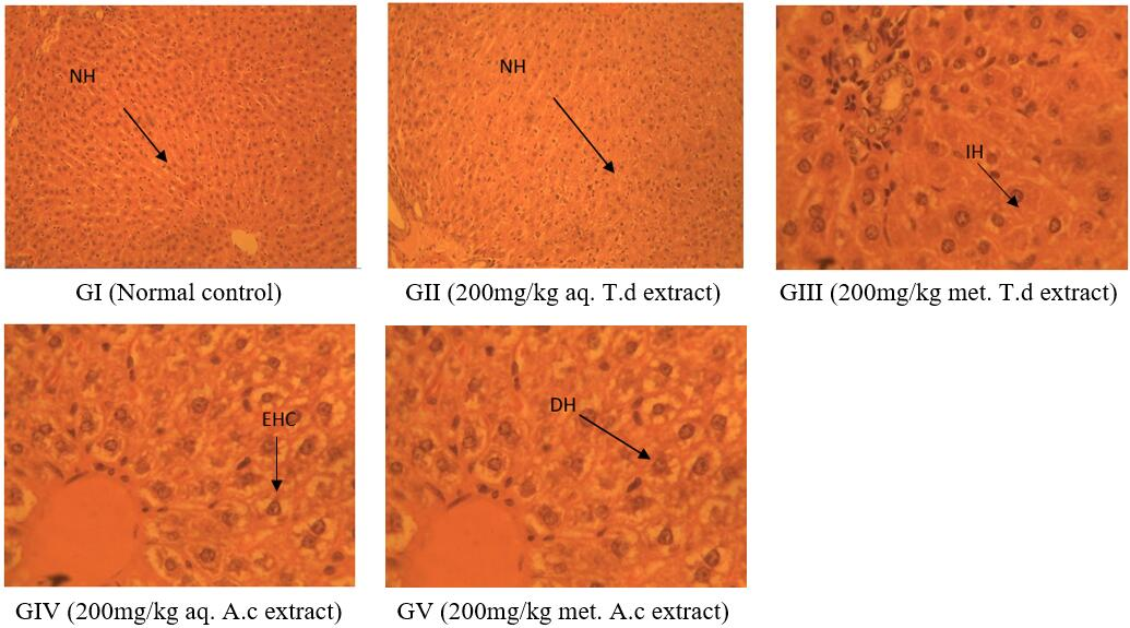 Histopathological Findings